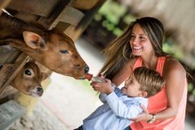 Top 5 Kids-Friendly Animals Adventures in Dubai